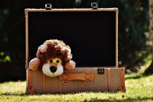 A lion disguised as a bear in a suitcase