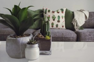 Clean before you transport your house plants