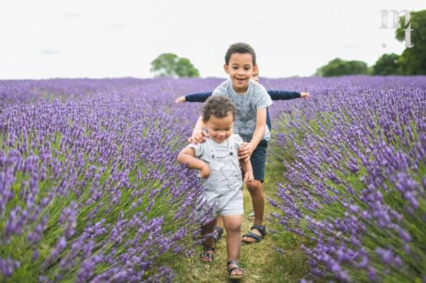 MTP_lavenderfarm_10