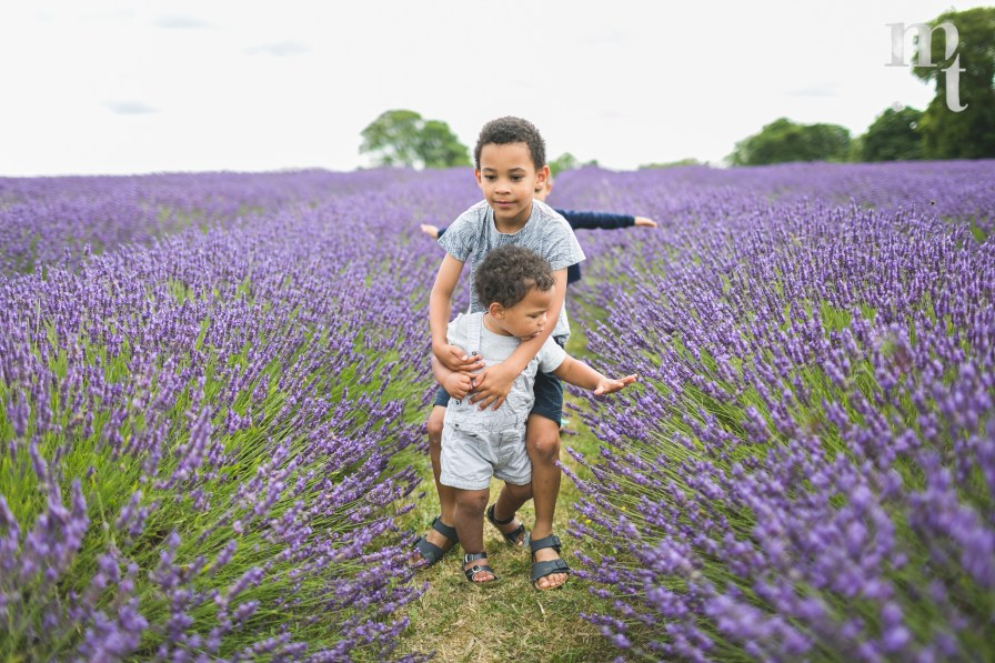 MTP_lavenderfarm_11