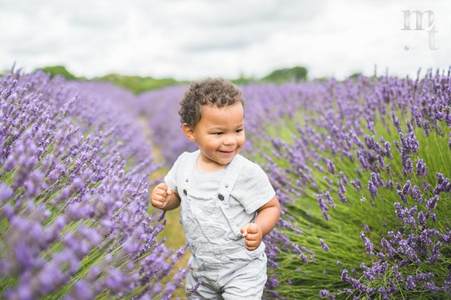 MTP_lavenderfarm_4