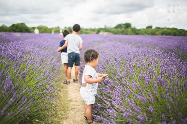 MTP_lavenderfarm_7