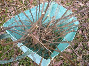 剪定された枝