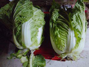 減農薬栽培の白菜