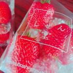 しぜん堂の大粒イチゴ