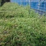 草を刈った園地
