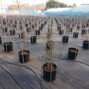 養液栽培のポット
