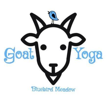Bluebird Meadow Goat Yoga in Ada, Michigan