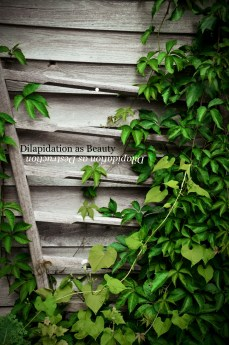 Dilapidation as Beauty/Dilapidation as Destruction