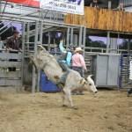 2019dayton FFA rodeo 23