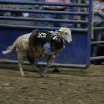 2019dayton FFA rodeo 33