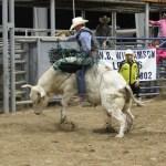 2019dayton FFA rodeo 81