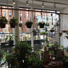 Niche – urban gardensupply {Decorate: Boston}
