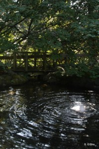 Wishing Pond