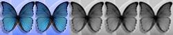 2 Schmetterlinge von 5