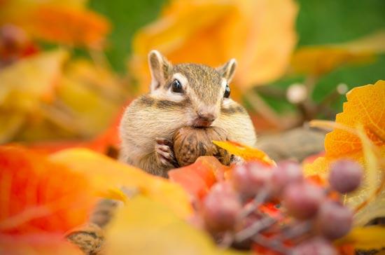 秋という季節とメンタルヘルス