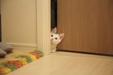 Ways to Keep a Cat from Pawing on a Bedroom Door & Cat-Proofing Your Home Archives - BLUE CRYSTAL SKY pezcame.com