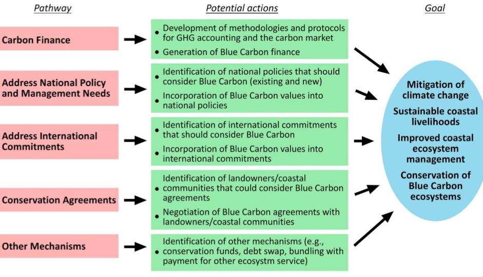 Blue Carbon Chart