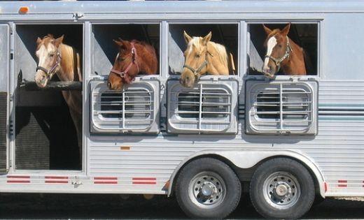 horse-trailer-1
