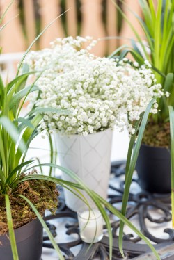 Babies breath in a tin container makes an airy centerpiece or accent.