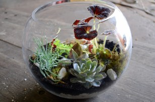 Fish bowls make fantastic terrariums with succulents, ferns and moss