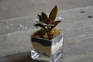 Mini terrariums with succulents and ferns
