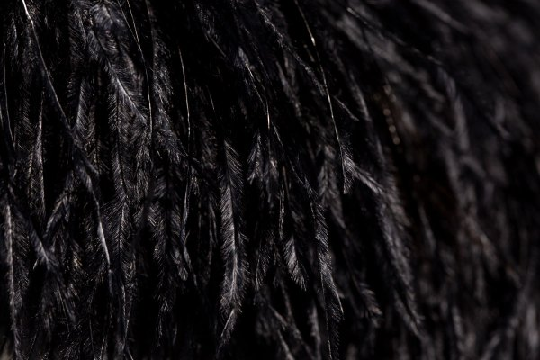 Close up on black colored ostrich feathers.
