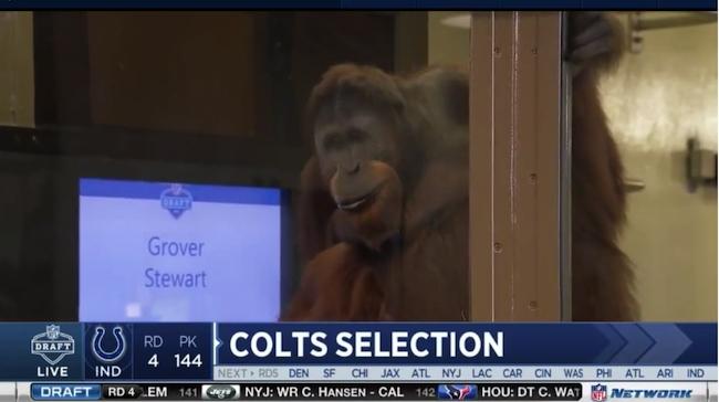 940bda33104 Colts Pick Orangutan Style In Middle Rounds - Blue HQ Media, LLC