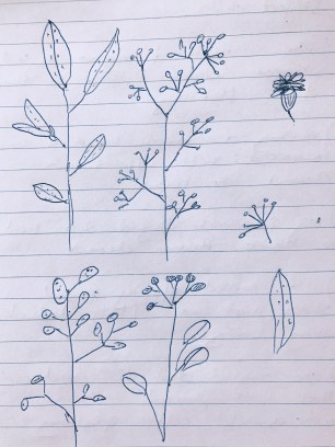 bloom-and-grow-notes-2