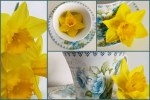 Daffodils and Teacups