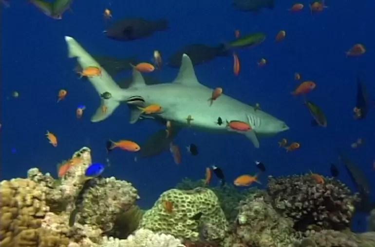 Wielka Rafa Koralowa w Australii 4