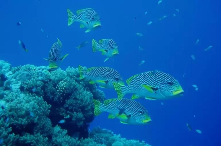 Wielka Rafa Koralowa w Australii2