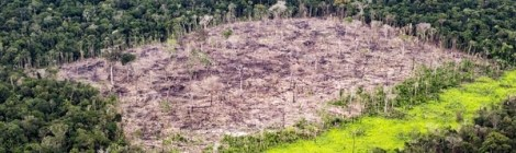 Brazilian Government Slashes Environment Budget