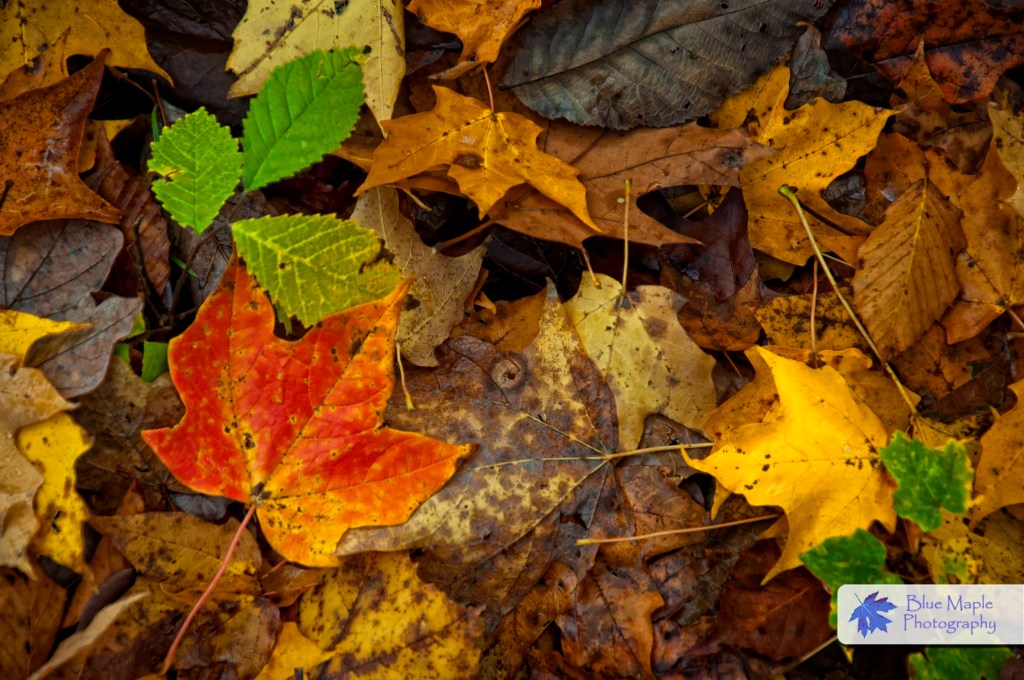 Fall October Wallpaper Leaf Images From Today And Rose Lake Hocking Hills State