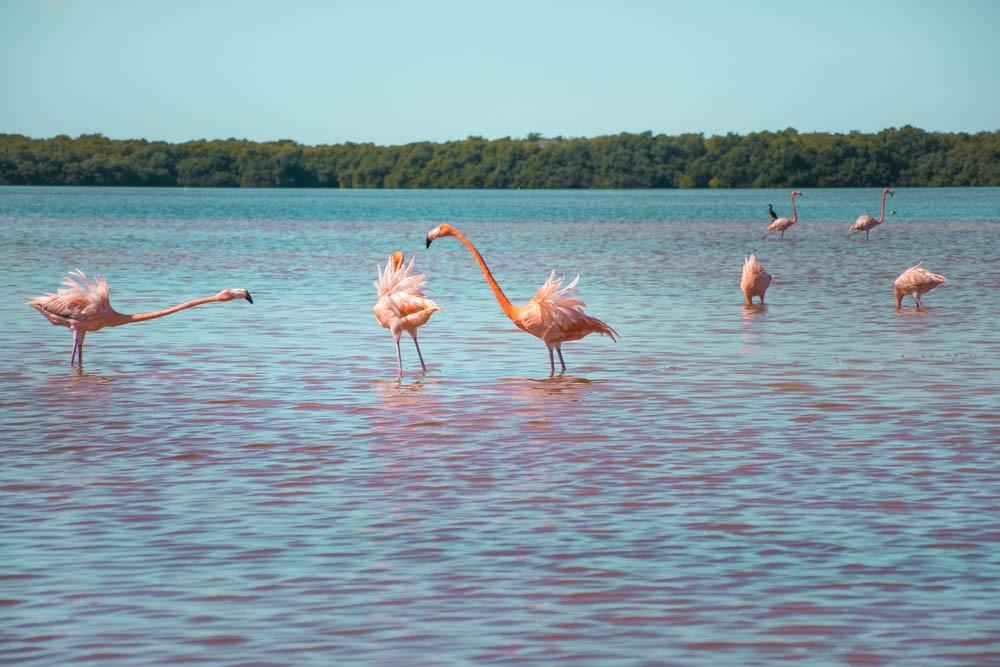 """nafrfuljeni"" flamingoti :)"