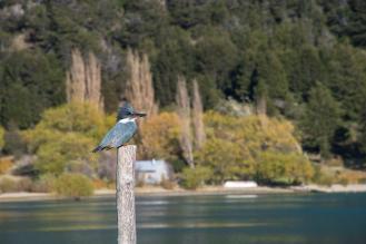 Bogata fauna ob Carreteri Austral