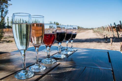 Degustacije vin v Argentini - 6 različnih vin na mizi med vinogradi