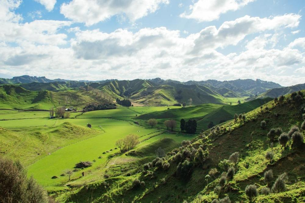 Green hills along The Forgotten World Highway (a must stop at New Zealand North Island Road Trip)