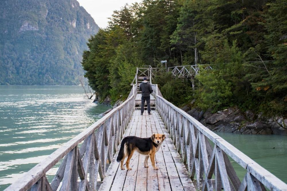 On the wooden path with a dog in Caleta Tortel (Unique towns in Patagonia)