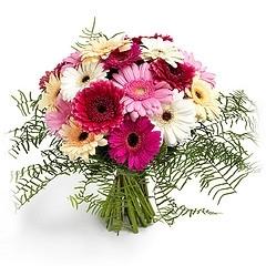 BlumenstraussGerberabunt  Versand fr BlumenPflanzen
