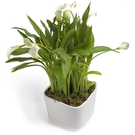 Blumenstrauss FirmenGeschenk   BlumenPflanzenFloristik