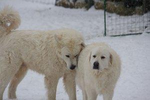polar-dogs