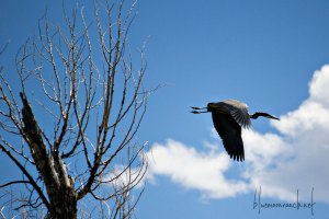 heron.flight
