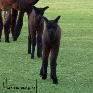 black-babies
