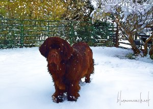 tilly-in-snow-nov152