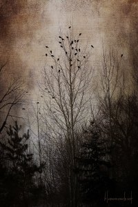 winter-storm-birds