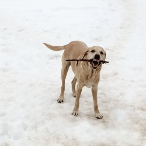 bodhi.stick