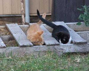 barn-kittens2