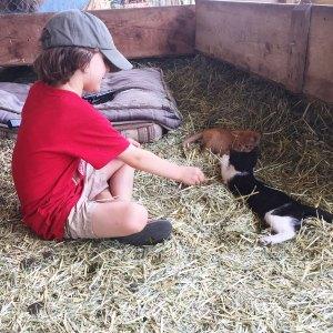 mesa.kittens