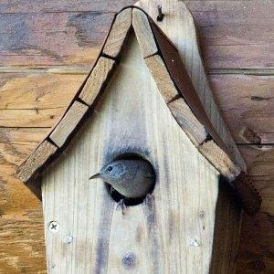 tiny-bird-1